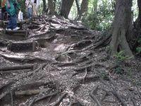 木の根っこが足場です